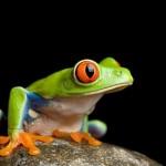 oko żaby… i trochę przemyśleń